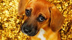 La ciencia confirma que tu perro pone ojitos para darte