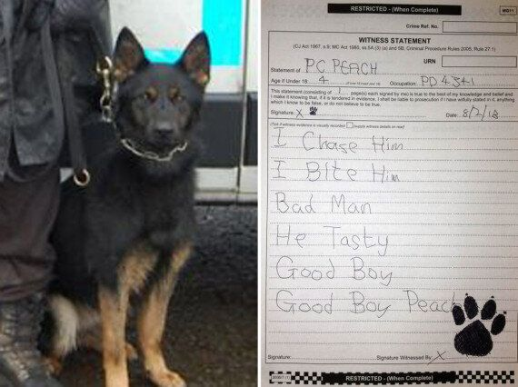 West Midlands Police Under Investigation After Witness Statement By Police Dog 'PC Peach' Ends Up On...