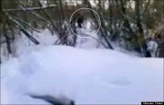 Yeti & Baby Footage In Siberia Is Real, Says Abominable Snowman Academic Igor Burtsev (VIDEO,
