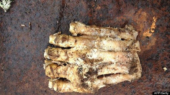 Bigfoot Mystery As Decomposed 'Foot' Is Found In Massachusetts Woods