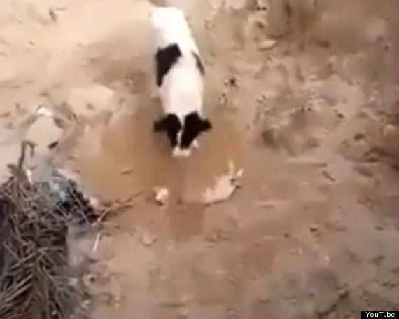 Dog 'Grieves' By Burying Dead Puppy In YouTube Footage