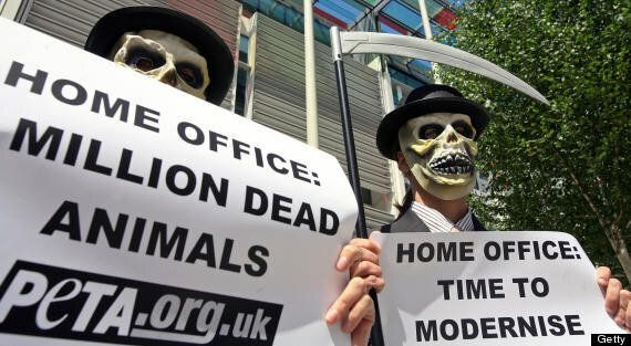 UK Animal Testing Up By 8%, Monkey Tests Rise By Almost One