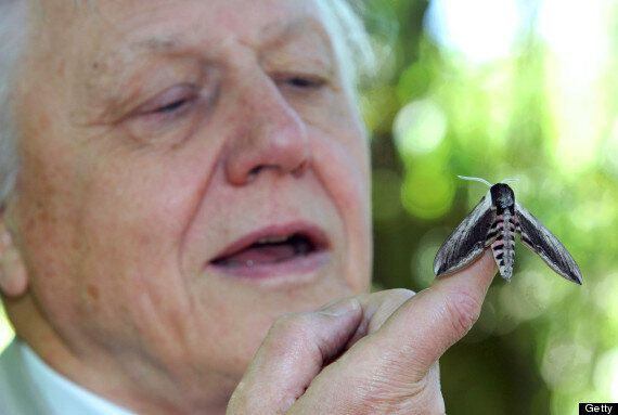 Phil Taylor, Tory Councillor, Suggests David Attenborough Should Commit
