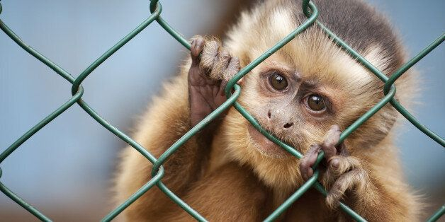 Universities Killed More Than A Million Animals In Scientific Research Last Year