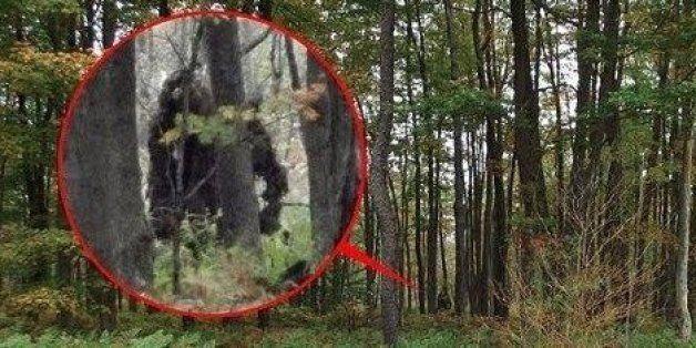 Bigfoot Found In Scotland? Dog Walker Snaps 'Sinister Figure'