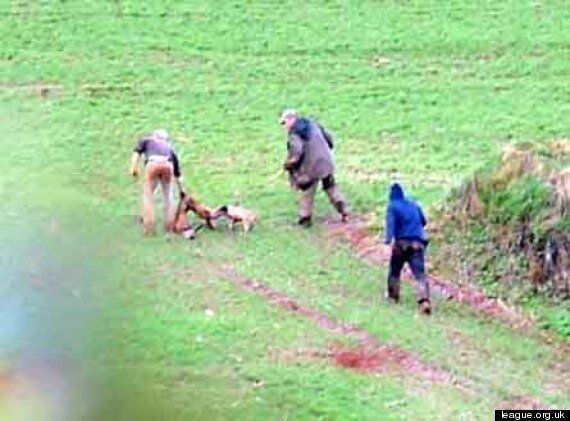 Shocking Fox Hunt Picture Shows Three Men Slaughtering An Animal In Front Of Children (GRAPHIC