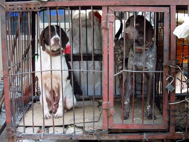 Tradition or Travesty: China's Yulin Dog Meat Festival - I Say