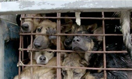 Struggling to be Heard - Unreported World Expose Vietnam's Dog