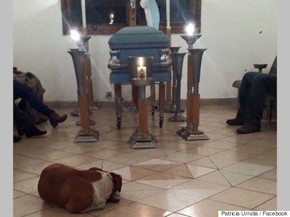 Stray Dogs Attend Funeral Of Elderly Animal Lover Margarita