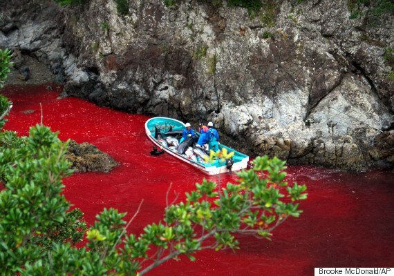 Dolphin Killing Season Begins In Taiji And 'The Cove's' Richard O'Barry Is