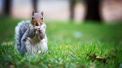 Un homme aurait donné de la meth à un écureuil pour en faire un animal