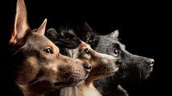 Saison des abandons à Montréal: et si on interdisait d'interdire les animaux dans les