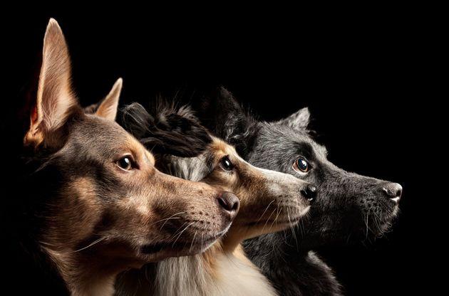 Saison des abandons: et si on interdisait d'interdire les animaux dans les