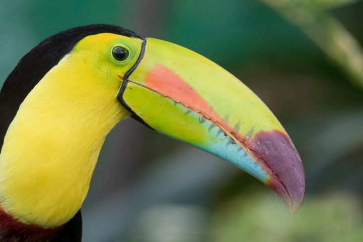Toucan Rescue Ranch started as a refuge for birds, but now houses roughly 200 rescued animals, including sloths and monkeys.