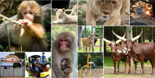 La SPCA reprend le transfert des animaux du zoo de