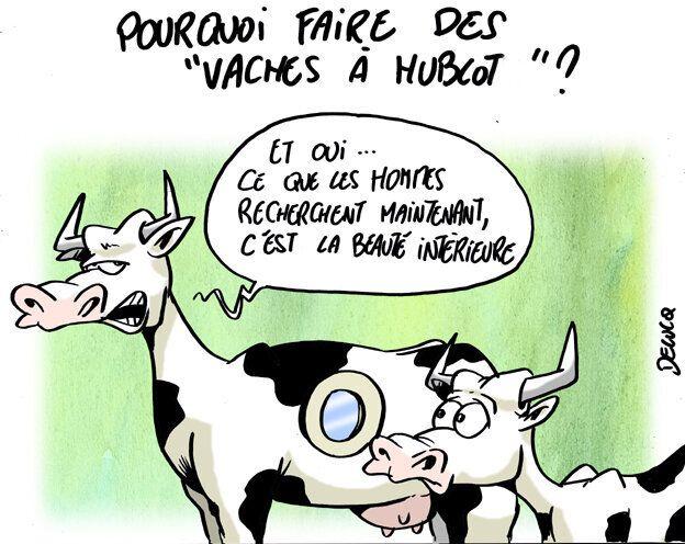 Vaches à hublot: On connaît la raison cachée de cette