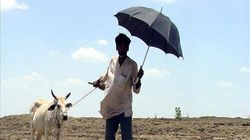 Exclusive: BJP, Shiv Sena Stole Fodder Funds From Cows In Drought-Hit
