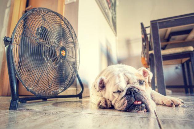 ¿Qué es lo peor del verano?
