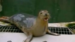 Scientists Actually Taught This Seal To Sing 'Twinkle, Twinkle, Little