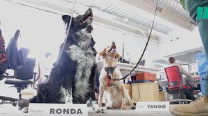 Un día en el trabajo con Tango, Lola, Trotsky, Ronda y