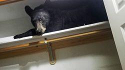 Bear Locks Itself Into Home And Sleeps In