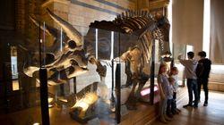 Βρέθηκαν απολιθώματα vegan δεινόσαυρου 68 εκατομμυρίων