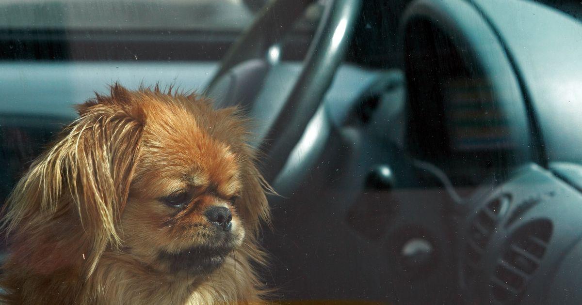 Canicule : a-t-on le droit de briser la vitre d'une voiture pour sauver un animal ?