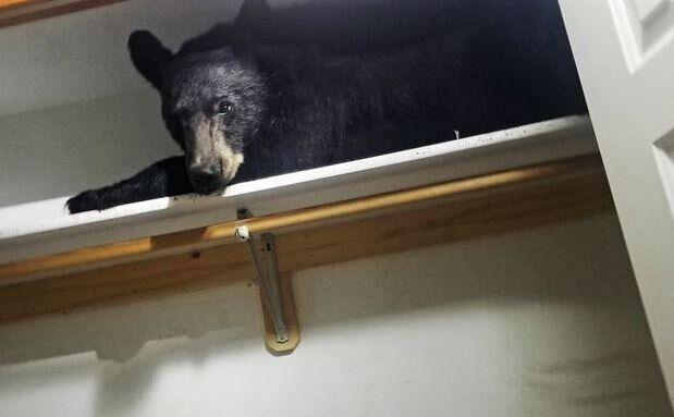 Αρκούδα απολαμβάνει την σιέστα της μέσα σε