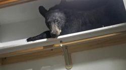 집에서 옷장을 열었더니 곰이 자고