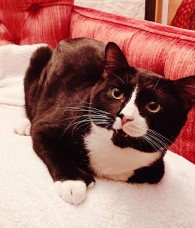 ステファニ・キャロルカーチョフさんの飼い猫の1歳の猫・フィリックス。45分間洗濯機の中で洗濯されてしまった