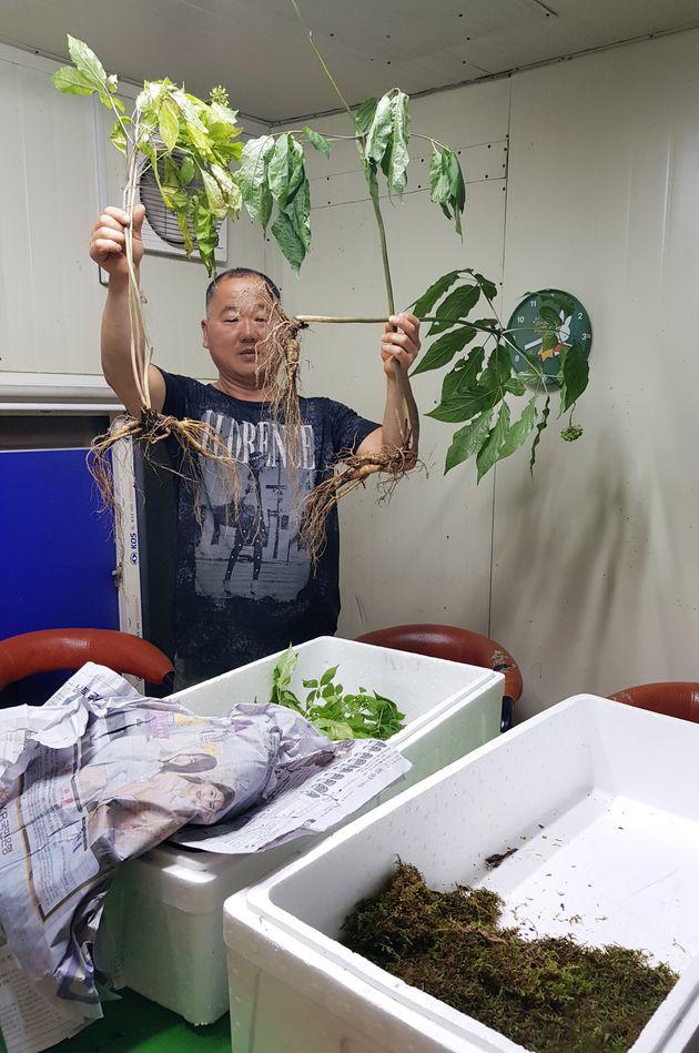 24일 전남 담양군 담양읍에 사는 심마니 전경식씨(53)가 사무실에서 자신이 캔 1억원 상당의 지종 산삼을 들고 흐뭇한 미소를 짓고