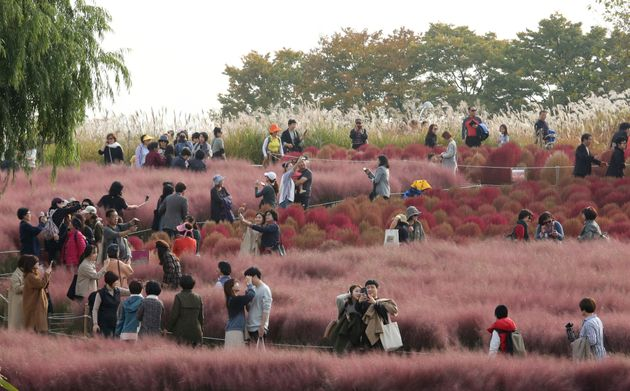 Visitors observe a field of pink muhly grass from a respectable distance in Seoul, South