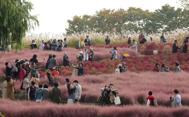 Visitors observe a field of pink muhly grass from a respectable distance in Seoul, South Korea.