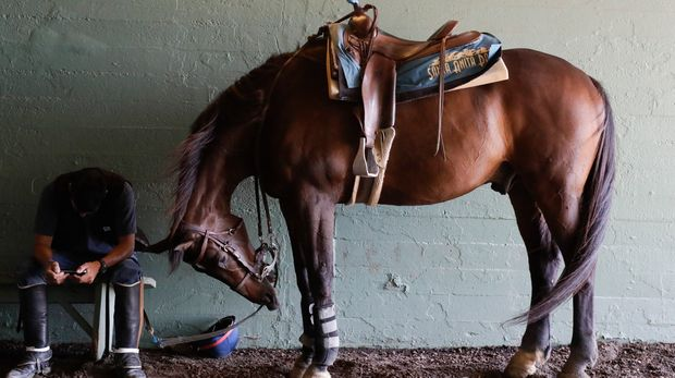 An outrider waits for the fourth race during the last day of the winter/spring meet at the Santa Anita horse racing track Sunday, June 23, 2019, in Santa Anita , Calif. (AP Photo/Chris Carlson)