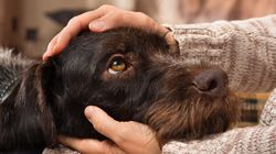 Τα σκυλιά αισθάνονται το στρες των ιδιοκτητών τους, σύμφωνα με