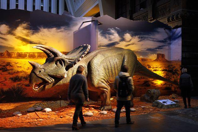 La plupart des tricératops devaient peser jusqu'à six tonnes et mesurer dix mètres...