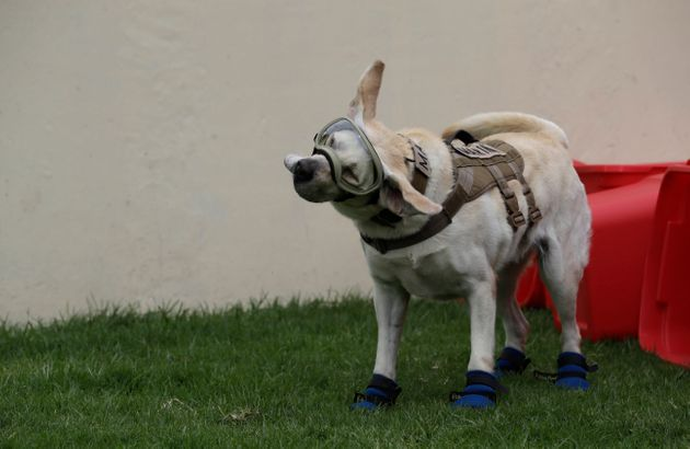 Mexico's Famed Rescue Dog Frida Retires From