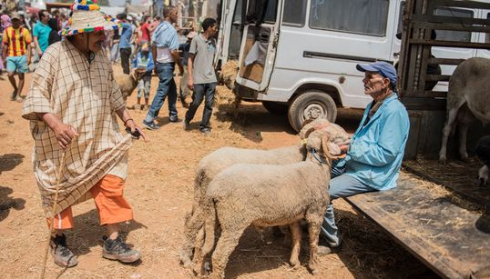 Aïd Al Adha: Plus de quatre millions et demi d'ovins et de caprins identifiés