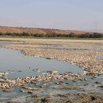Des milliers de poissons retrouvés morts au Lac Oum