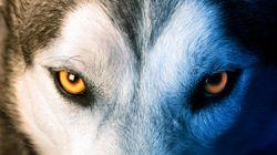 Dormez avec de vrais loups dans ce parc