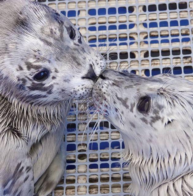 Vancouver Aquariums Names Seal Pups After Meghan Markle, Prince Harry