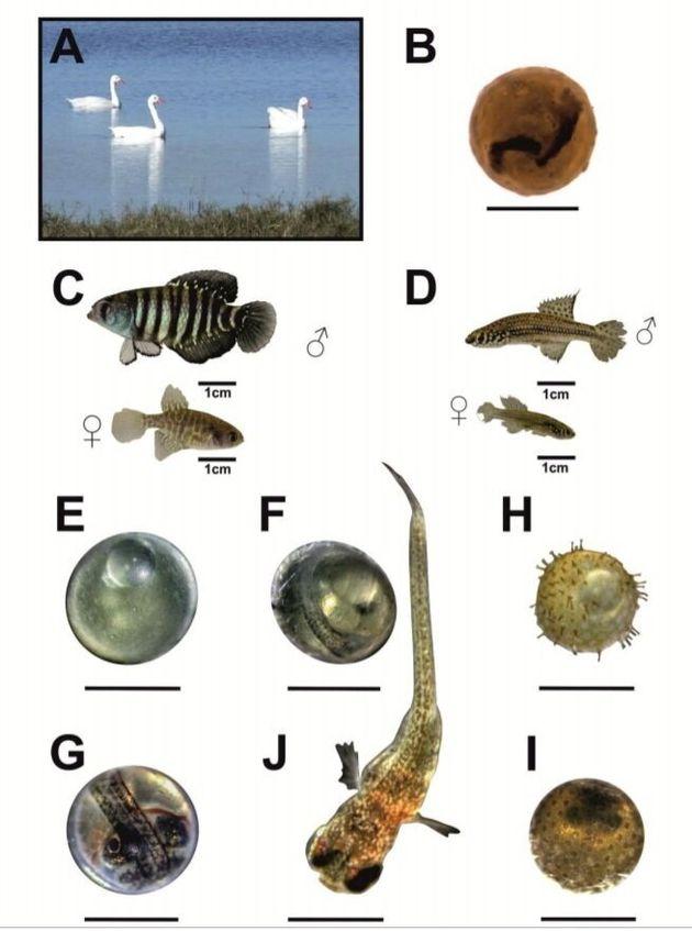 외딴 호수의 물고기는 어디서 왔을까? '웅덩이 미스터리'가 드디어