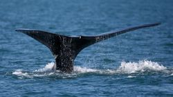 Feds Add Speed Limit To Gulf Of St. Lawrence After Another Whale