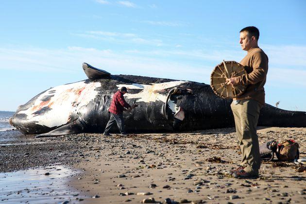 Le 7 juin, une baleine noire a été retrouvée morte sur cette plage de Miscou Island,...