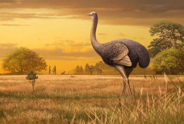 Προϊστορικό πουλί- γίγαντας, βάρους μισού τόνου, ανακαλύφθηκε στην