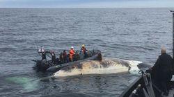Ottawa a trop tardé pour protéger les baleines noires, dit une