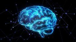 Des chercheurs décrivent le comportement des neurones pendant le