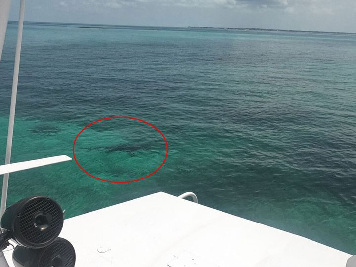 A fairly large shark was photographed in the same area of the island just before the attack.