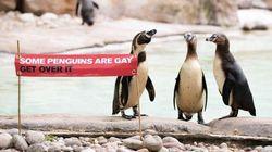 「ゲイのペンギンもいます。何か文句ある?」ロンドン動物園、LGBTQを可愛いバナーで祝福