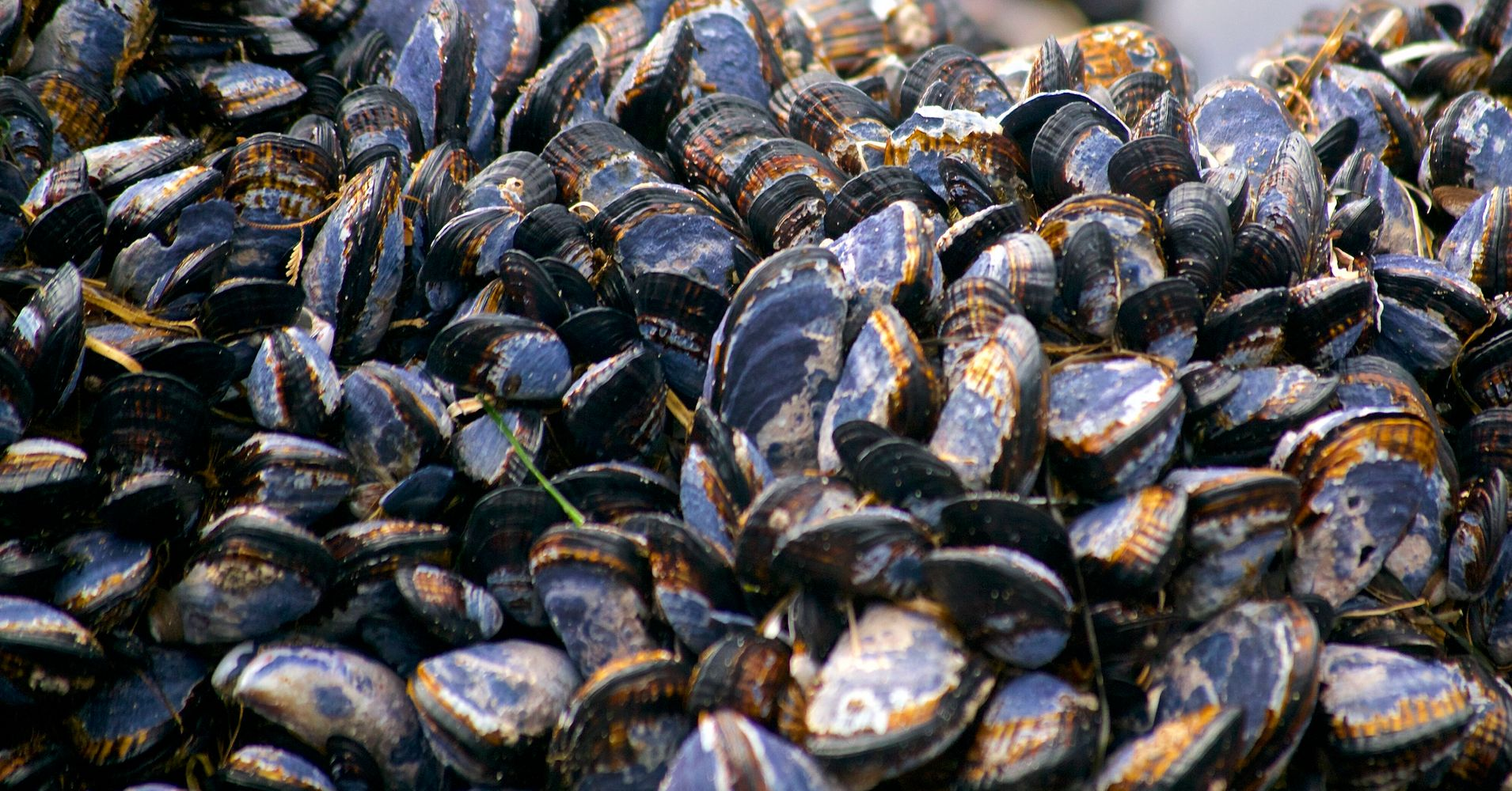 Image result for mussels cooked on california coastline